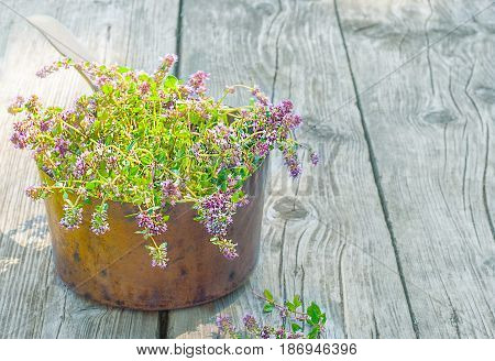 Fresh Thyme In A Old Copper Pot