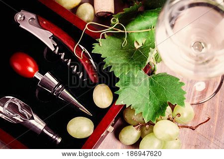 Wine Grape Grapevine and Corkscrew on Background