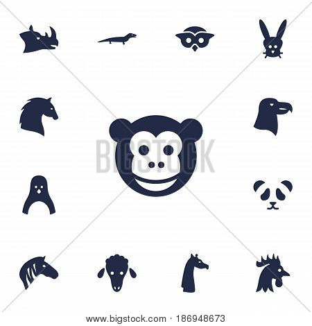 Set Of 13 Brute Icons Set.Collection Of Bunny, Bear, Gecko And Other Elements.