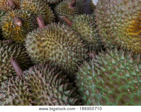 Durian Which Is Smelly Sweet Thai Fruit.
