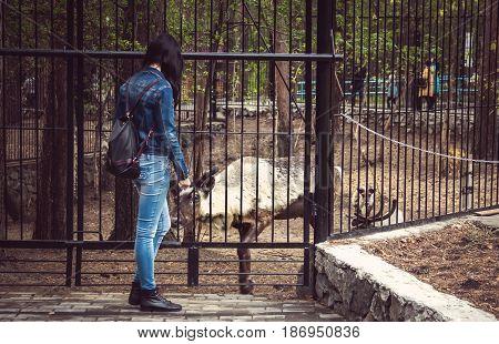 Woman Is Feeding A Deer On A Farm Through A Fence