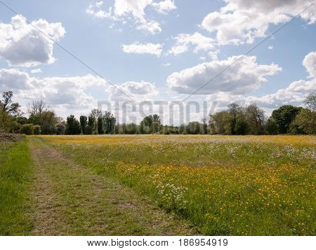 Summer Field Of Buttercups Outside In Countryside No People Open