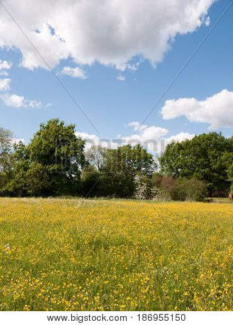 Summer Field Of Buttercups Outside In Bright Light At Peace