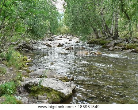 Small river in the mountains. Clear water flows between rocks and grass. Forest in the background. Altai Mountains, Russia.