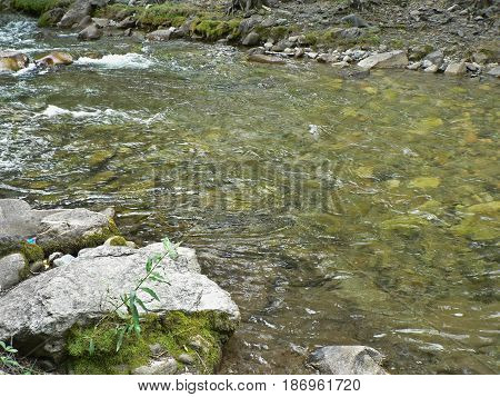 Small river in the mountains. Clear water flows between rocks, ecology theme. Cold creek running among stones.