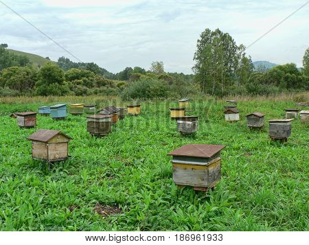 Lot of old wooden beehives on a green field. Distant apiary in the mountains. Trees in the background. Altai Mountains, Russia.