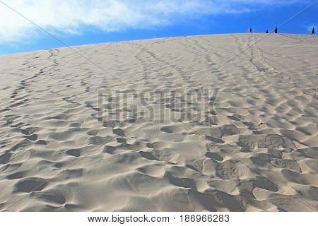 Sand dunes of the Dune du Pyla, France