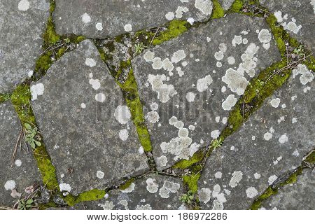 Detail of lichen and moss growing on ancient paved street