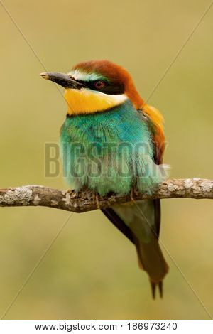 Portrait of a colourful bird looking at side