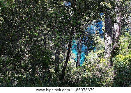 Green Ocean Glimpse Through Trees