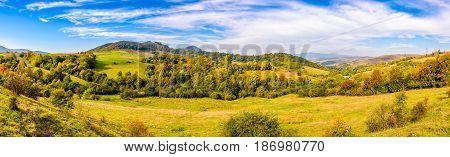 early autumn mountain landscape. panoramic view of green meadow near the forest on the hillside in Carpathians.
