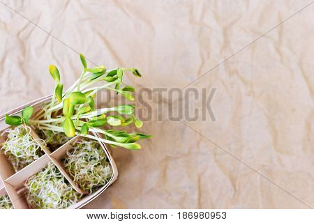 Mixed organic micro greens on craft paper. Fresh sunflower and heap of alfalfa micro green sprouts for healthy vegan food cooking. Healthy food and diet concept. Cut microgreens, top view with copy space