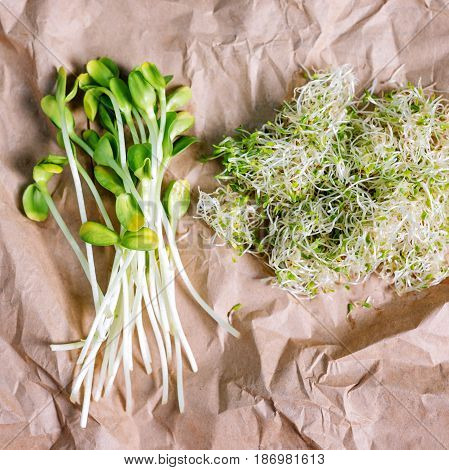 Mixed organic micro greens on craft paper. Fresh sunflower and heap of alfalfa micro green sprouts for healthy vegan food cooking. Healthy food and diet concept. Cut microgreens, top view.