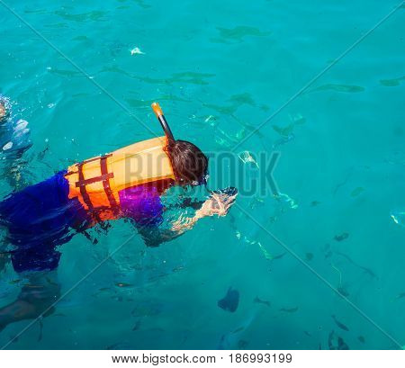 Diving photography of fish in the sea snorkeling
