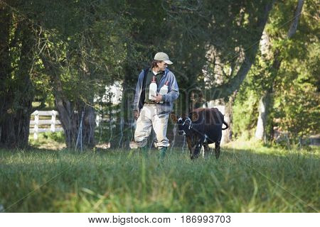 Man walking with bottles and calf through field