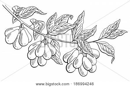 Dogwood berry graphic branch black white isolated sketch illustration vector