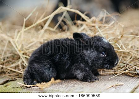 Rabbit In Farm Cage Or Hutch. Breeding Rabbits Concept