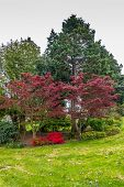 A view of trees and flowers at Hamilton Viewpoint Park in West Seattle Washington. poster