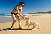 Bikini girl playing with puppy on the beach poster