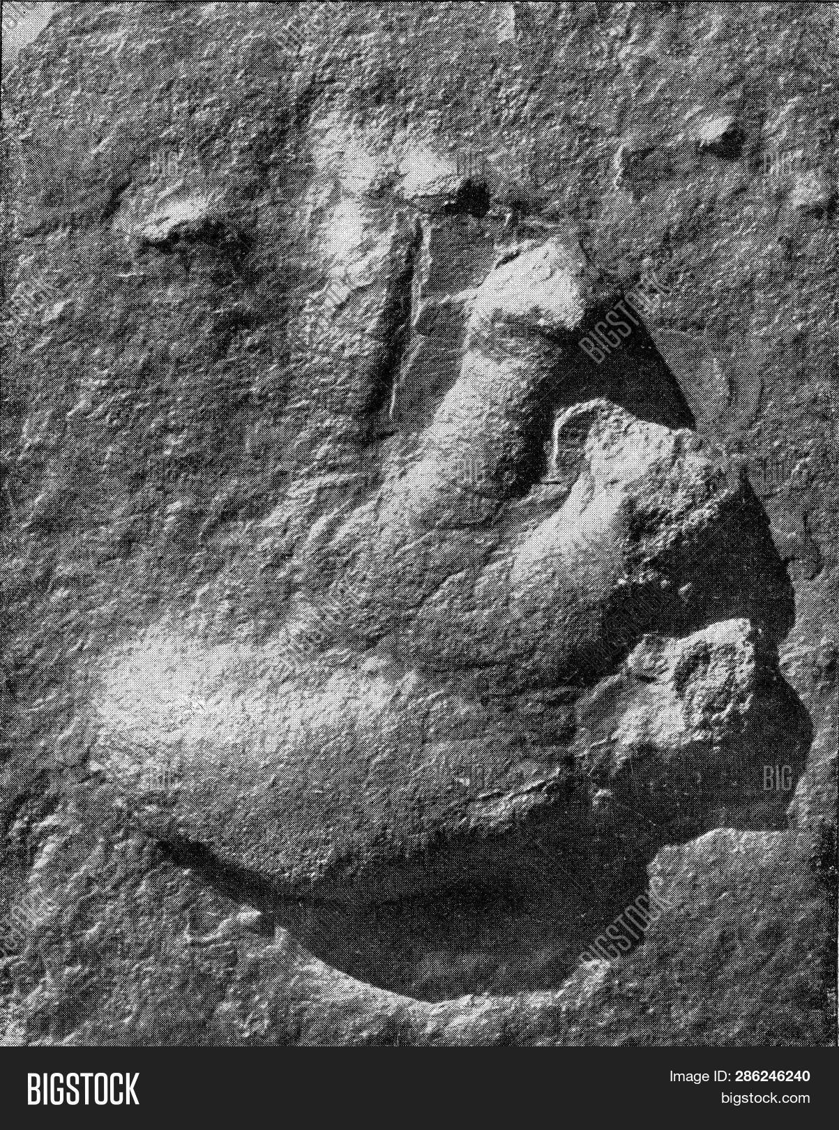 Footprint Vertebrate Image & Photo (Free Trial) | Bigstock
