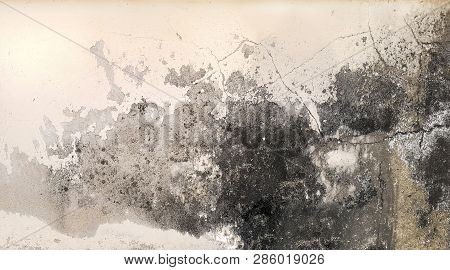 Excessive moisture can cause mold and peeling paint wall , such as rainwater leaks or water leaks. poster