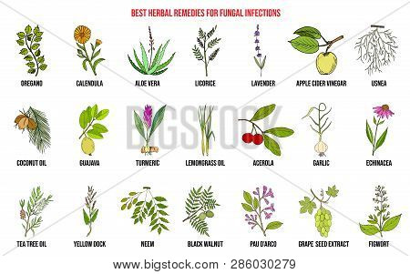 Best Herbal Remedies For Fungal Infections. Hand Drawn Vector Set Of Medicinal Plants