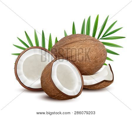 Coconut. Fresh Tropical Opened Coco Fruit With Milk And Palm Green Leaves Vector Natural Dessert. Co