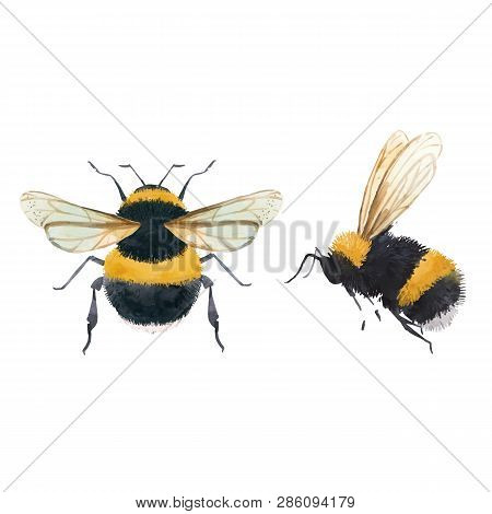 Beautiful Vector Illustrations With Watercolor Bumblebee Bee Wasp Insect