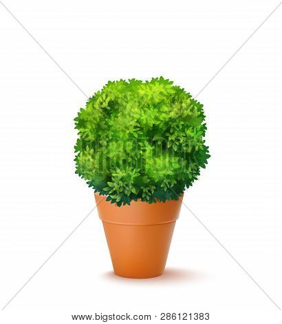 Fresh Green Ornamental Bush In The Ceramic Pot. Vector Realistic 3d Illustration Isolated On White