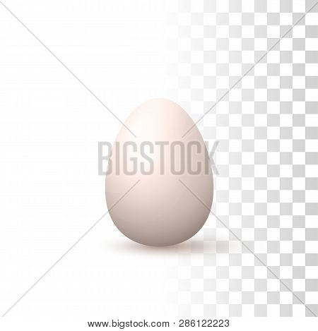 Vector Photo Realistic 3d Natural Egg Illustration On Transparent Background