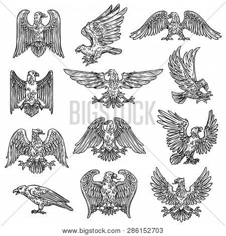 Eeagles Herladic Sketch Icons. Vector Gothic Heraldry Bird Design, Coat Of Arms And Royal Shield Sym