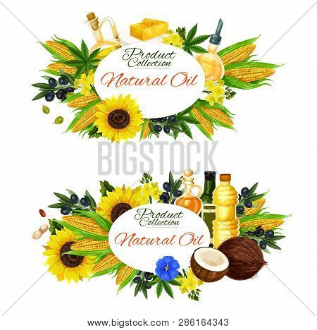 Natural Cooking Oils, Salad Dressing And Food Ingredients. Vector Sunflower, Extra Virgin Olive Or L