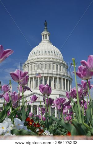 United States Capitol Building in spring - Washington DC United States