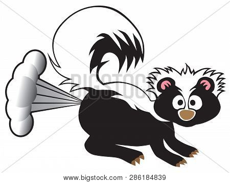 A Young Skunk Has Been Startled So He Has Released His Defensive Spray