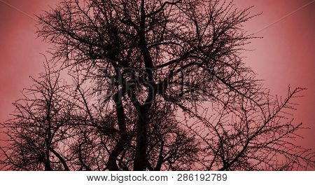 View From Below Of Gingko Tree Against Red Dusk Sky Background Winter Dusk