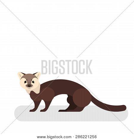 Marten Animal. Wild Mammal. A Forest Predator