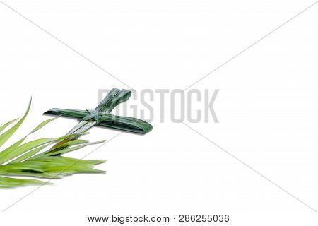 Close Up View Of Cross Shape Of Palm Leaf With Green Leaves Isolated Over White Background. Palm Sun