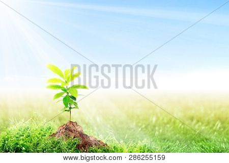 Young Plant Growing On Fertile Soil In Meadow With Sunlight And Blue Sky Background. Earth Day Conce
