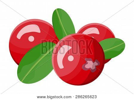 Cranberry Isolated On White Background. Branch With Red Berries And Green Leaves. Organic Healthy Fo