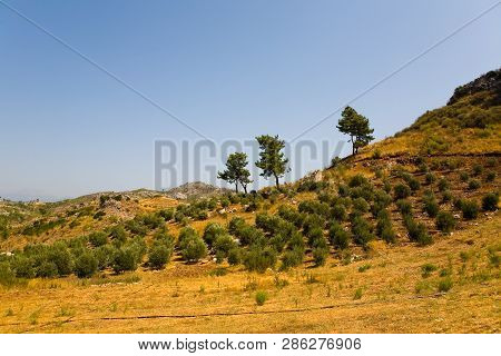 Agricultural Landings On The Mountain In Turkey. Landscape.