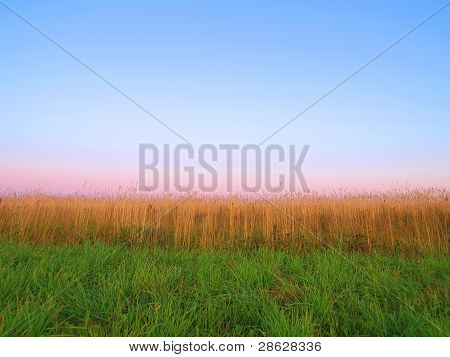 The Background. The Sky, Cereals And Green Grass.