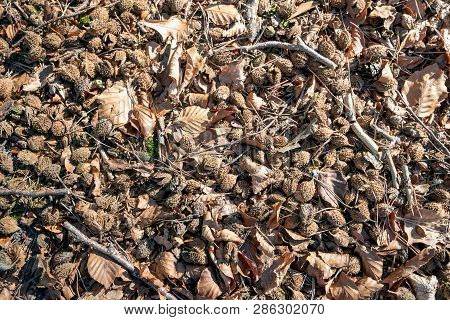 Closeup Of The Forest Floor Under A Beech Tree As Seen From Above. The Photo Was Taken In The Dutch