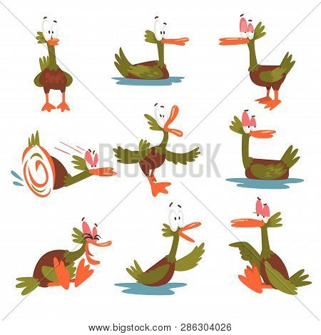 Funny Male Mallard Duck Set, Comical Bird Cartoon Character In Different Situations Vector Illustrat
