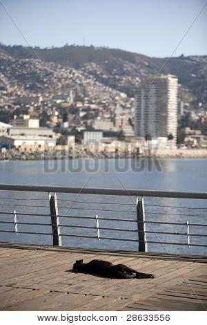 dog sleeping to valparaiso
