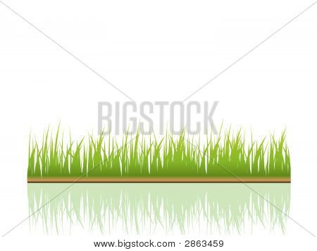 Grass background. Many more ecology images in my portfolio. poster