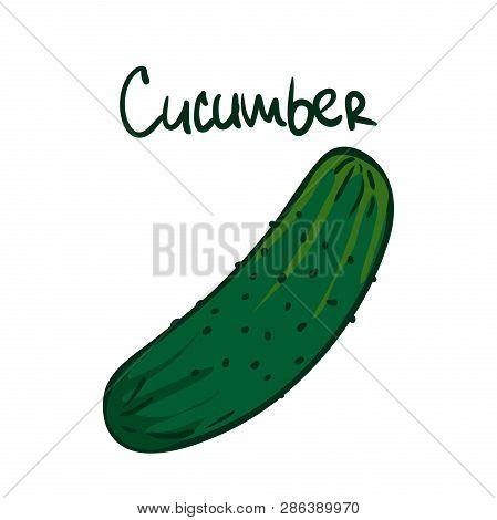 Vector Illustration. Green Cucumber. Healthy Vegetarian Food. Ingredient For Salad. Decoration For P