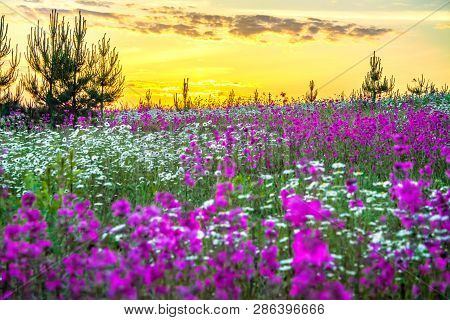 Beautiful Spring Landscape With Blooming Wild Flowers In Meadow And Sunrise. Summer Field With Flowe