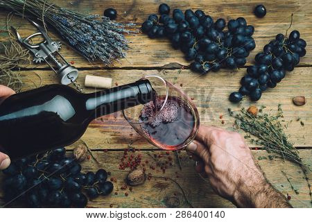 Wine Maker Pouring Red Wine (bio) For Tasting. Red Wine Tasting In A Wine Glass With Grapes, Nuts An