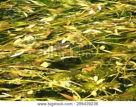 Abstract Watercolor Landscape Overgrown Pond. Pond With Overgrown Surface Of Underwater Plants. Digi