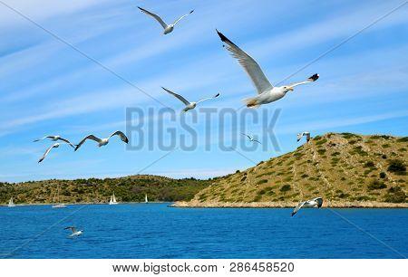 Flock Of Seagulls Flying Over The Sea In Kornati National Park, Croatia.